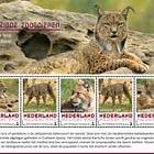 Endangered Mammals - Iberian Lynx