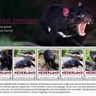 Endangered Mammals 2017 - Tasmanian Devil