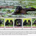 Endangered Mammals 2017 - Bonobo