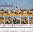 Endangered Mammals 2017 - Przewalski's Horse