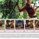 Endangered Mammals 2017 - Sumatraanse Orang-Oetan