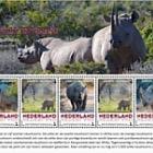 Endagered Mammals 2018 - Black Rhinoceros