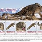 Endangered Mammals 2018 - Snow Leopard