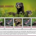 Endangered Mammals - European Mink