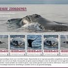 Mammiferi in via di estinzione 2018 - Whale