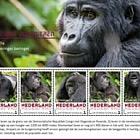 Endangered Mammals 2018 - Gorilla