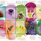 Experience Nature - Insects