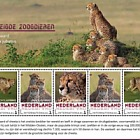 Endangered Mammals 2018 - Cheetah