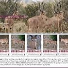 Endangered Mammals 2018 - Hirola