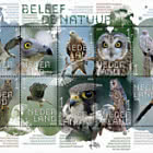 Experience Nature - Birds of Prey and Owls