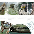 Experimente la Naturaleza - Aves Rapaces y Búhos