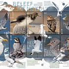 Vivi La Natura: Gli Uccelli Costieri