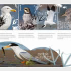 Experience Nature - Coastal Birds 809B