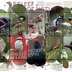 Experimente La Naturaleza: Aves Forestales Y Brezales