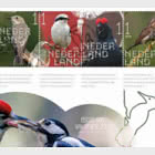 Experience Nature - Forest & Heathland Birds - 812B