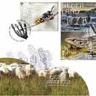 Experience Nature - Dwingelderveld 818a