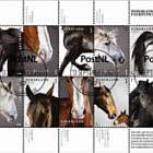 Dutch Horse Breeds