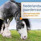 Dutch Horse Breeds -  640B