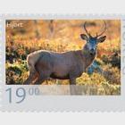 Vida Silvestre En Noruega VI 2014