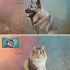 Mascotas Preciosas