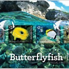 2017 Butterflyfish of Niue First Day Cover