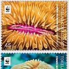 Tokelau Corals
