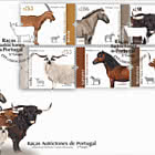 Portuguese Autochthonous Breeds - FDC Set