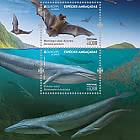 Azores - Europa 2021 - Endangered National Wildlife