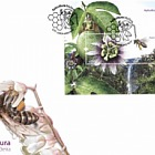 Apiculture- Madeira Island- (FDC M/S 1)