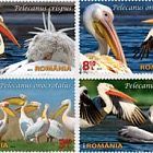 Protected wildlife in Romanian reserves: Pelicans