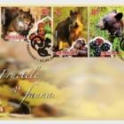 Fruits and Fauna