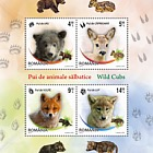 Wild cubs