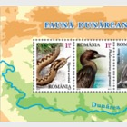 Protected fauna of the Danube River