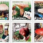 Mushrooms 2008