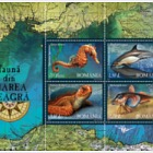 Fauna from the Black Sea