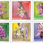 Romanian Wild Orchids