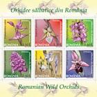 Romanian Wild Orchids