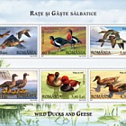 Wild Ducks and Geese