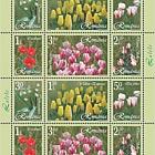 Tulips (Type II)