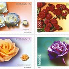 Rosas rumanas