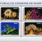 Corals and anemones 2002