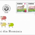 Breeds of Sheep from Romania