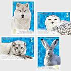 Polar - Fauna