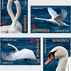 The Danube Delta Swans
