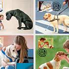 狗 - 人类的朋友