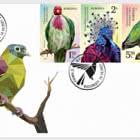 Exotic Pigeons
