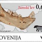 Fossile Säugetiere in Slowenien - Höhlenlöwe
