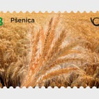 Cereals of Slovenia - Wheat