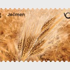 Cereals of Slovenia - Barley