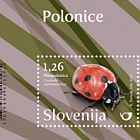 Fauna - Ladybird - Seven-spot Ladybird